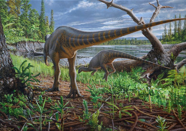 Turkey-sized dinosaur from Australia preserved in an ancient log-jam