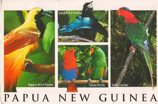 """Brilliant plumage of native birdlife"" postcard from Papua New Guinea"