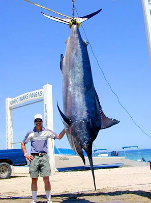 Big Fishes of the World: MARLIN BLACK (Makaira indica)