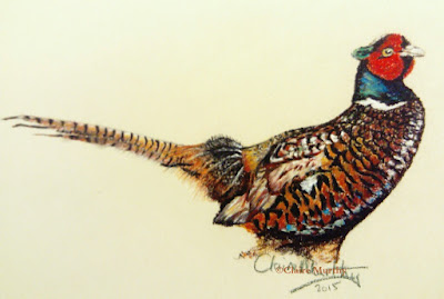 painting of a british bird