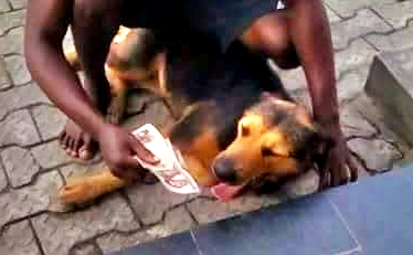 Too Hilarious! Nigerian Man Seen Training His Dog On How To Swallow Money