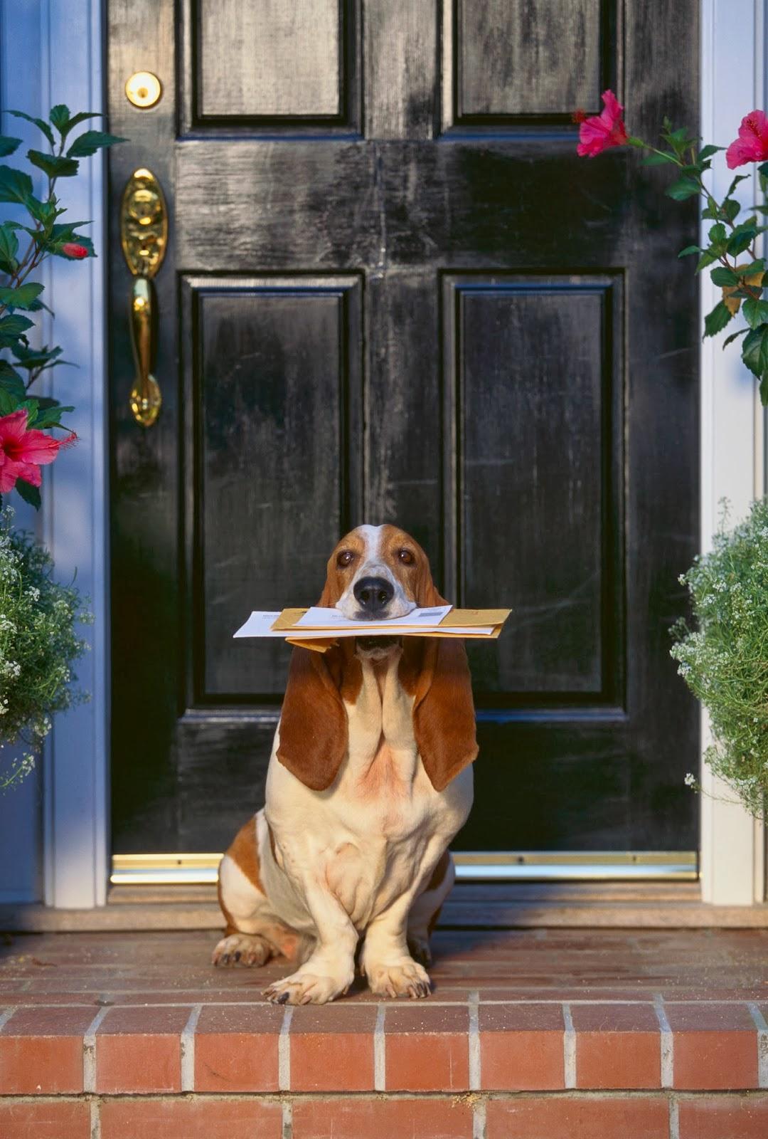 Hound holding mail