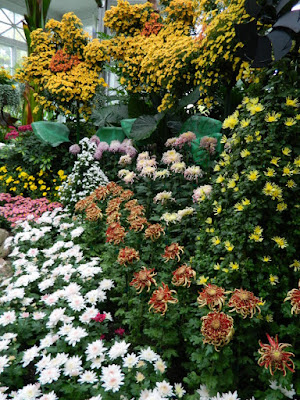 Massed mums on display at 2016 Allan Gardens Conservatory  Fall Chrysanthemum Show by garden muses-not another Toronto gardening blog