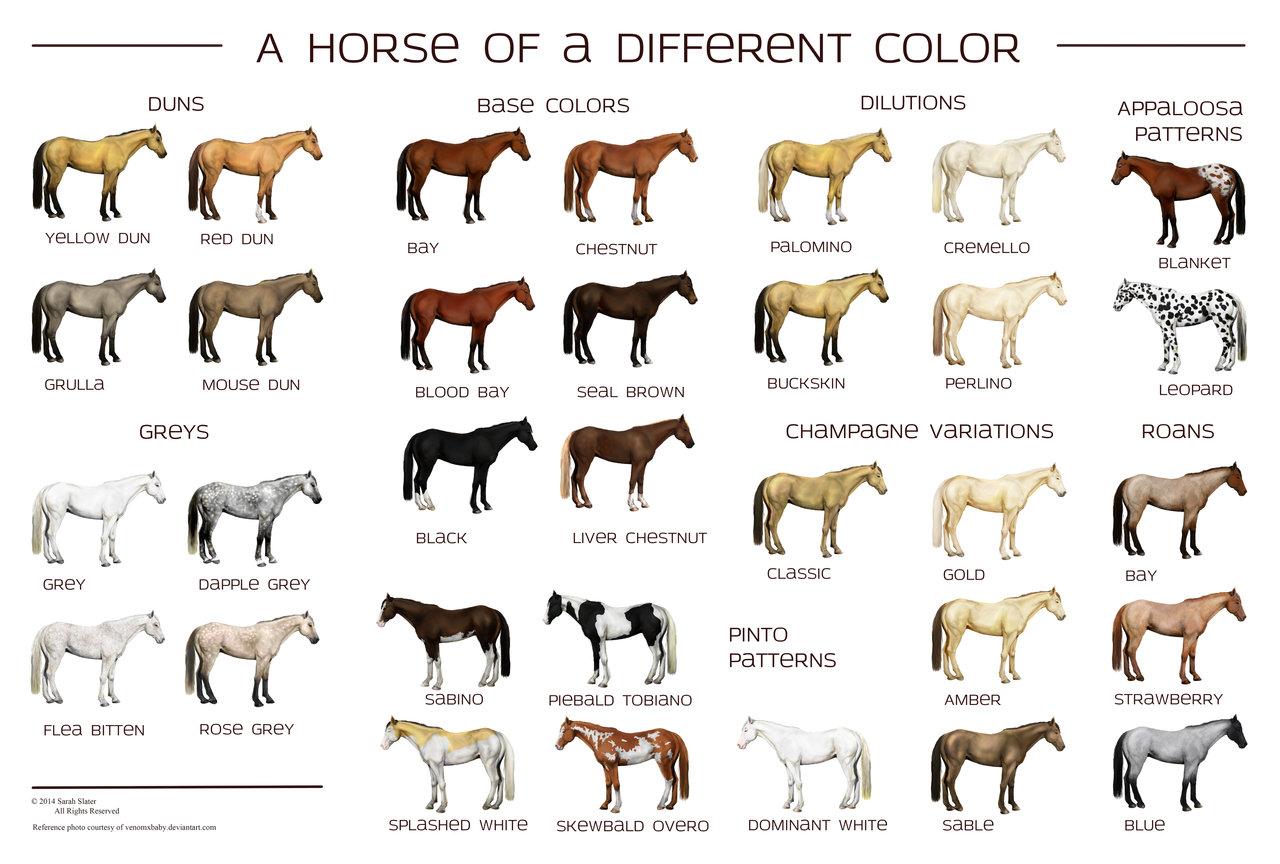 Art And Lore Anatomi Tanda Dan Warna Kuda