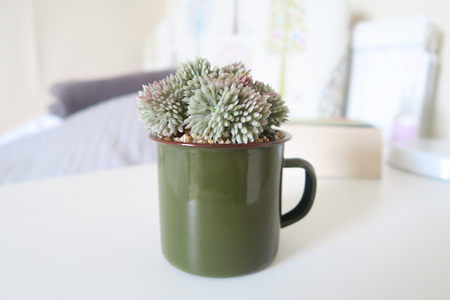 Bedside table decor succulent Dunelm