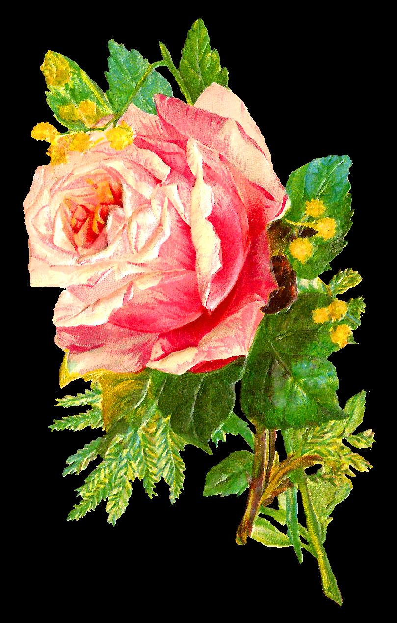 rose flowers digital design - photo #5