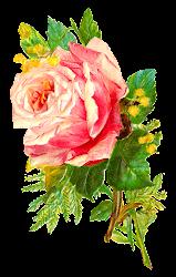 Antique Images: Digital Antique Rose Flower Illustration