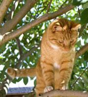 fabriquer un arbre chat plus de 400 parcours muraux originaux pour chats. Black Bedroom Furniture Sets. Home Design Ideas