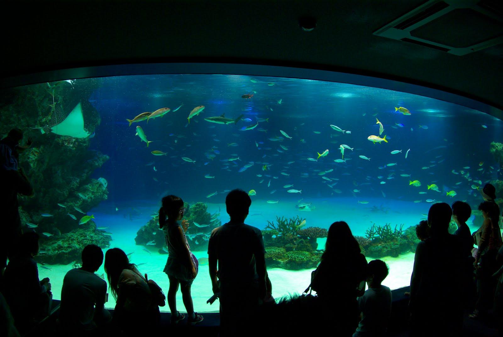 今日、発見したこと: 池袋サンシャイン水族館 今日、発見したこと 日常...   今日、発見した