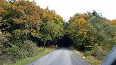 Herbstlaub im Jasmund Nationalpark
