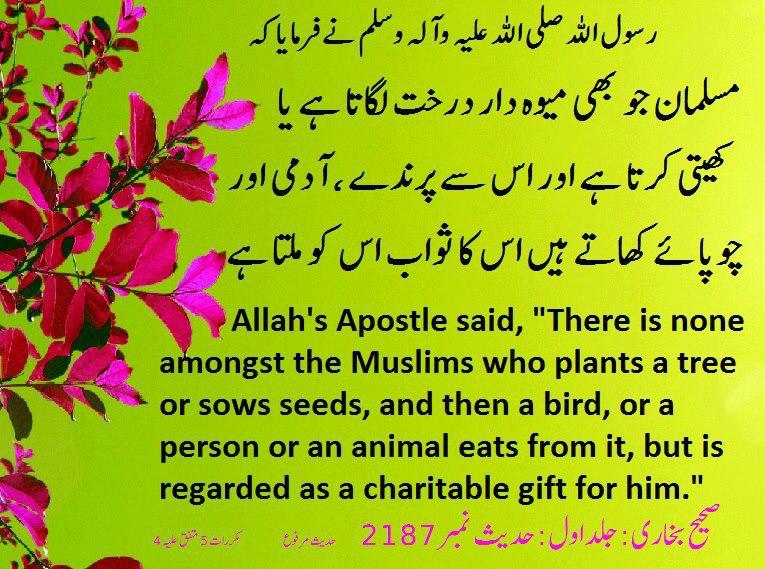 Tree Darakht Ugana Planting Trees ~ Hadith Urdu, Islamic ...
