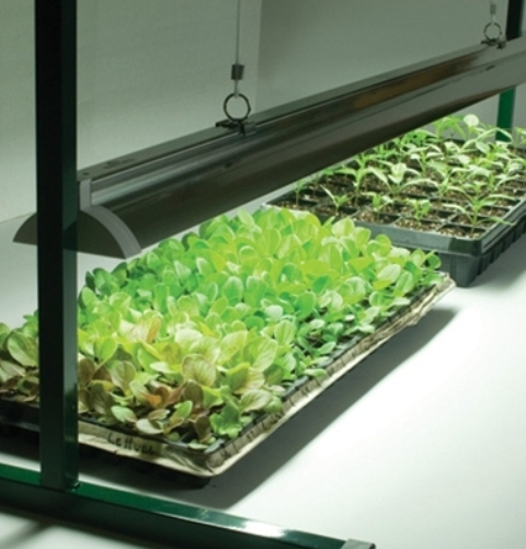 The flower bin seed starting tips and supplies for Indoor gardening lights
