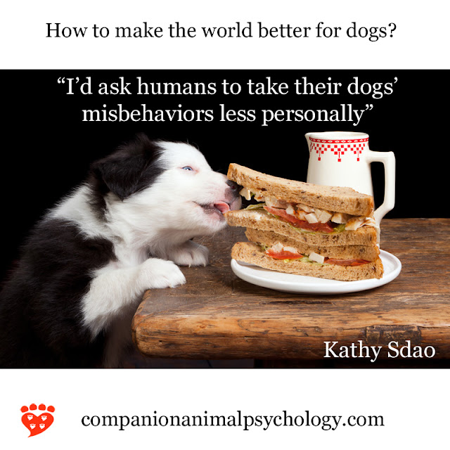 A puppy steals a sandwich - but we should take dogs' misbehaviors less personally