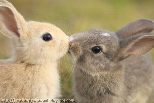 Two cute bunny kiss