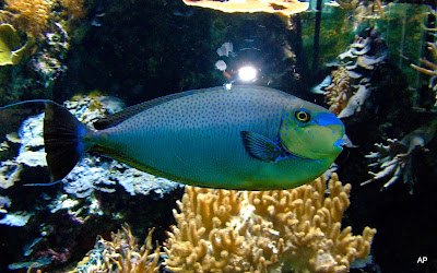 Fauna morska i słodkowodna