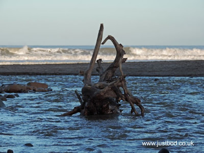 Old tree roots / driftwood, Sandsend, Yorkshire