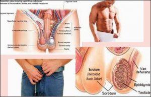 obat alami untuk penyakit infeksi saluran kemih paling ampuh
