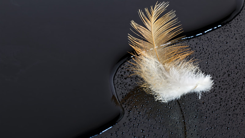 Feather on Water. Black Surface