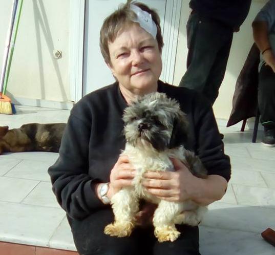 υιοθεσία αδέσποτων κτηνίατρο