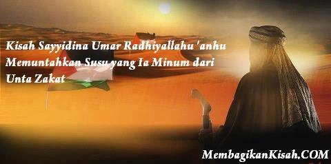 Kisah Sayyidina Umar Radhiyallahu 'anhu Memuntahkan Susu yang Ia Minum dari Unta Zakat