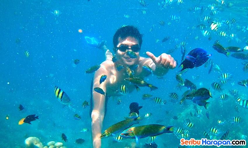 snorkeling di pulau dolphin dengan paket wisata pulau kelapa