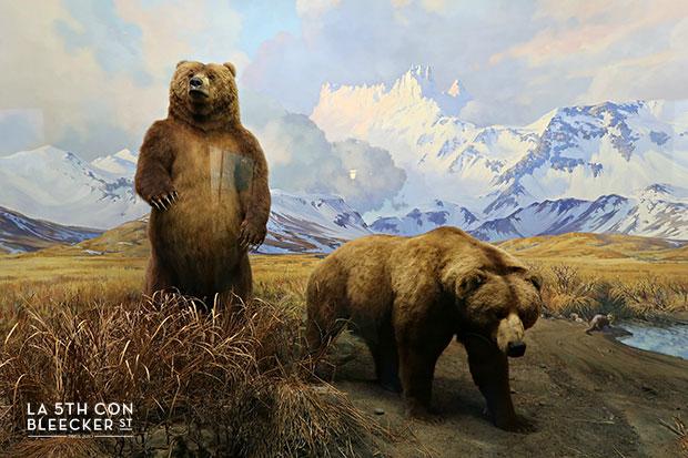 Museos en Nueva York historia natural