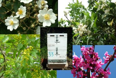 Τι λέει η ζυγαριά Bees Scale τον Μάιο
