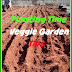Planting Time.....and Veggie Garden Tips