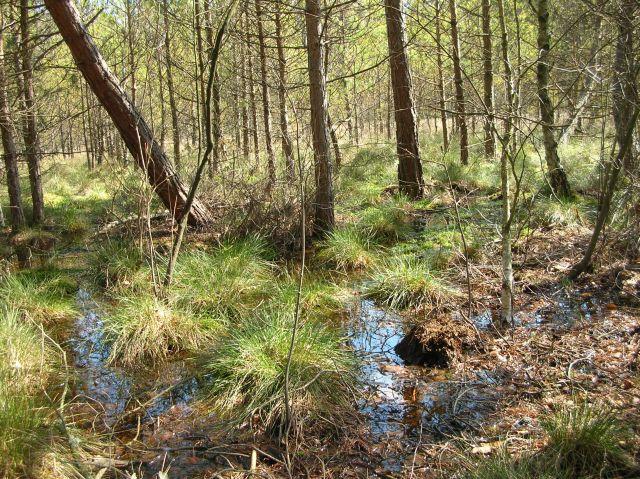 woda, drzewa, klub przyrodników, Świebodzin