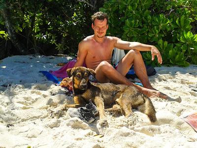 Streunender Hund am Strand auf La Digue