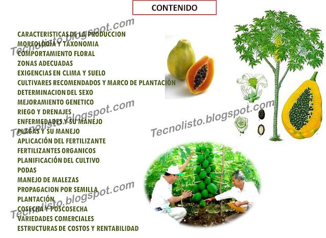 """Manual de Cultivo Siembra de lechosa3"""