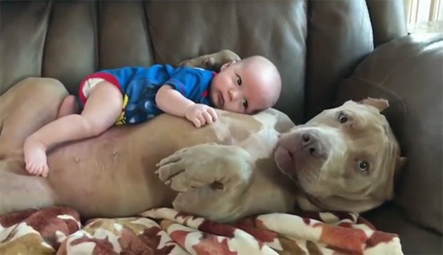 Dog Protecting Baby - Dog is not only a pet but also a good friend