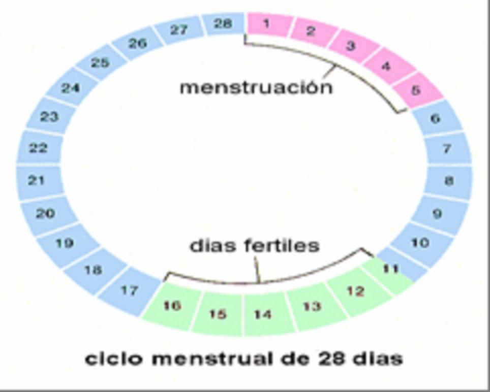 Cuando una mujer irregular puede quedar embarazada
