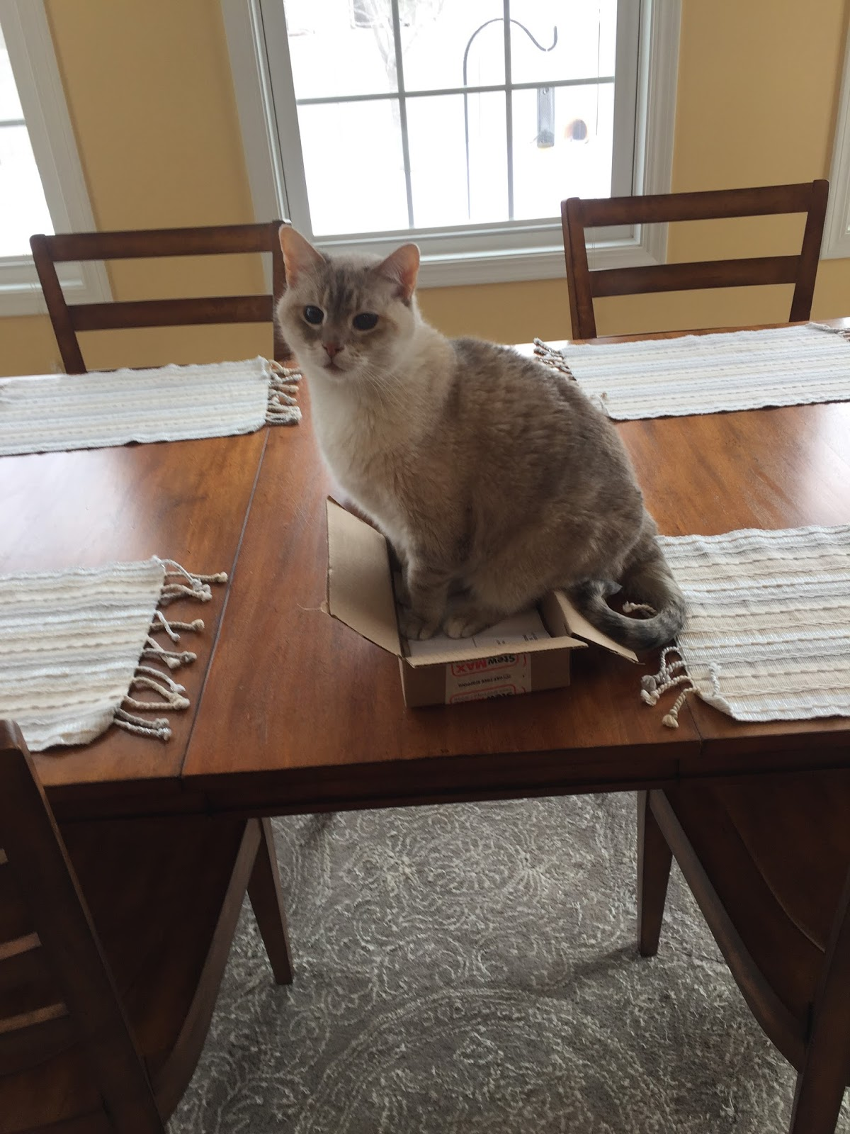 We all know that the fastest way to round up cats is to put out a cat trap. Any time of day just set out an open box and within minutes it ... & Life in Nebraska: Improvised Cat Traps Aboutintivar.Com