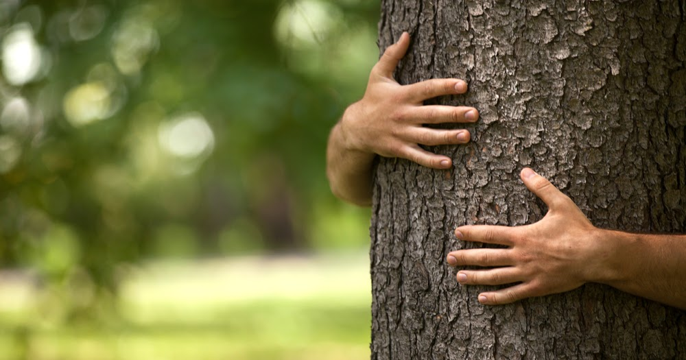 4 reasons why using real wood is good for the environment
