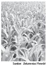Kegiatan Pertanian