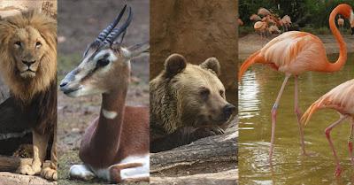 http://vigozoo.com/fauna/