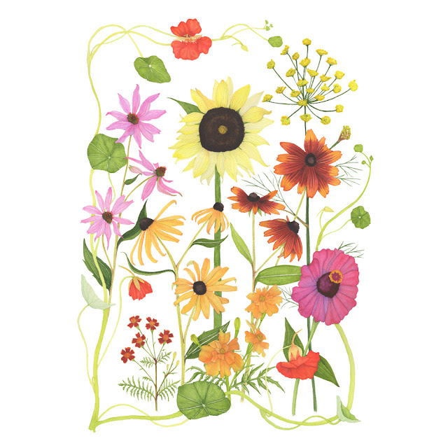 nasturtiums, paintings, watercolor, botanical watercolor, sunflower, black eyed susan, coneflower, fennel, zinnias, summer flowers, Anne Butera, My Giant Strawberry