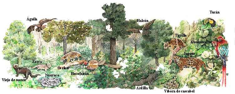 Bosque de niebla fauna for Medio en el que habitan los arboles