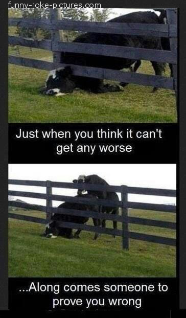 Hilarous Bad Cow Day Worse Meme Photo
