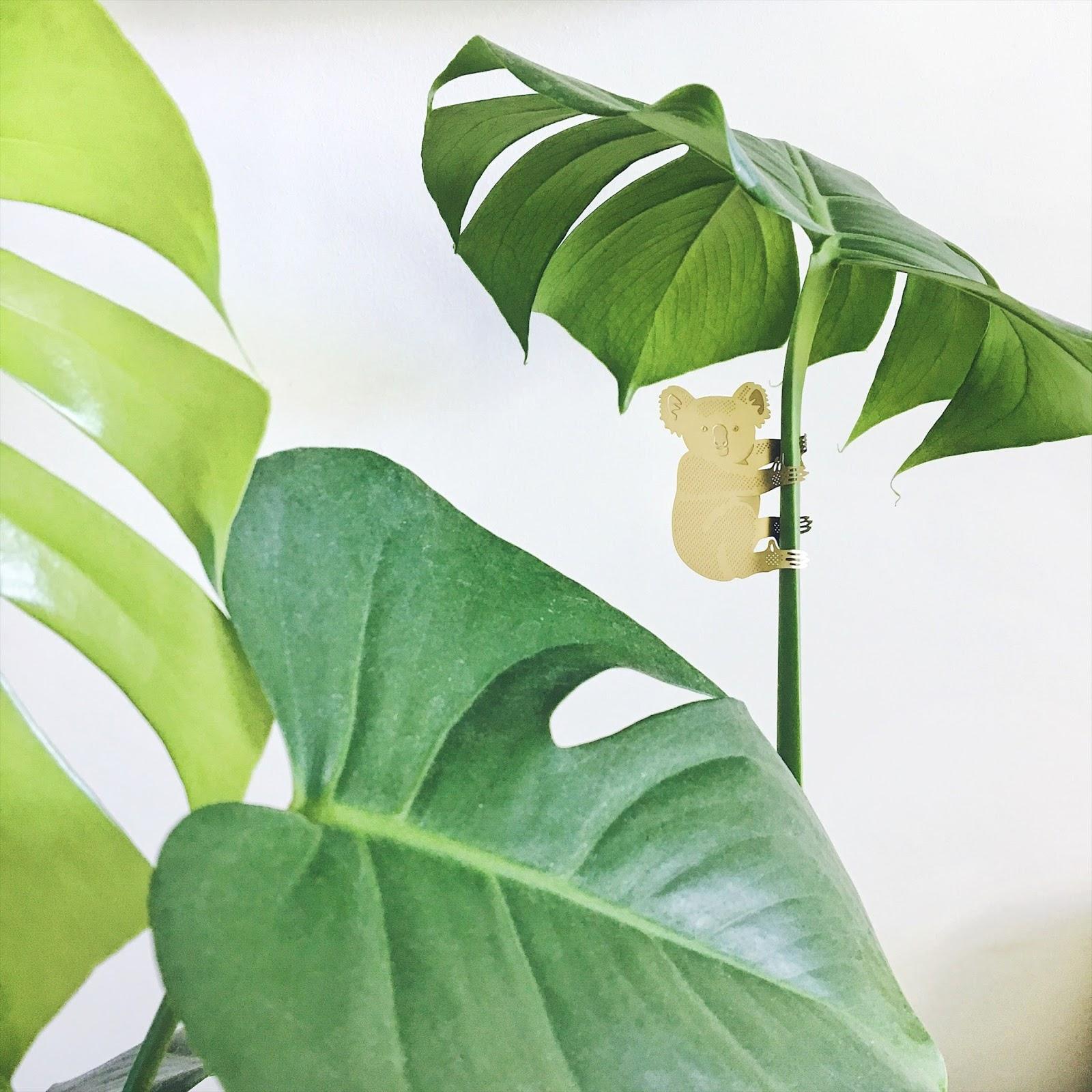 augalų aksesuarai