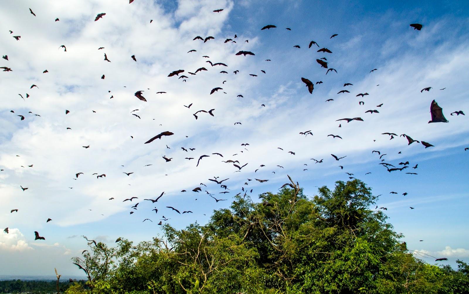 Desa Wisata Sumbermujur Tawarkan Potensi Hutan Bambu Dengan