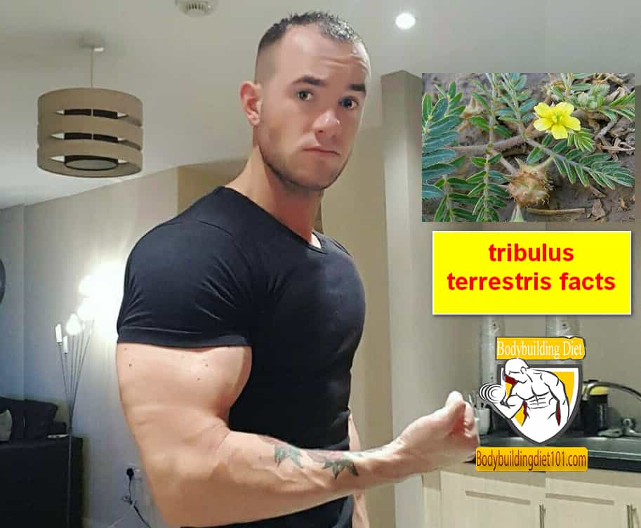 Tribulus Terrestris Facts