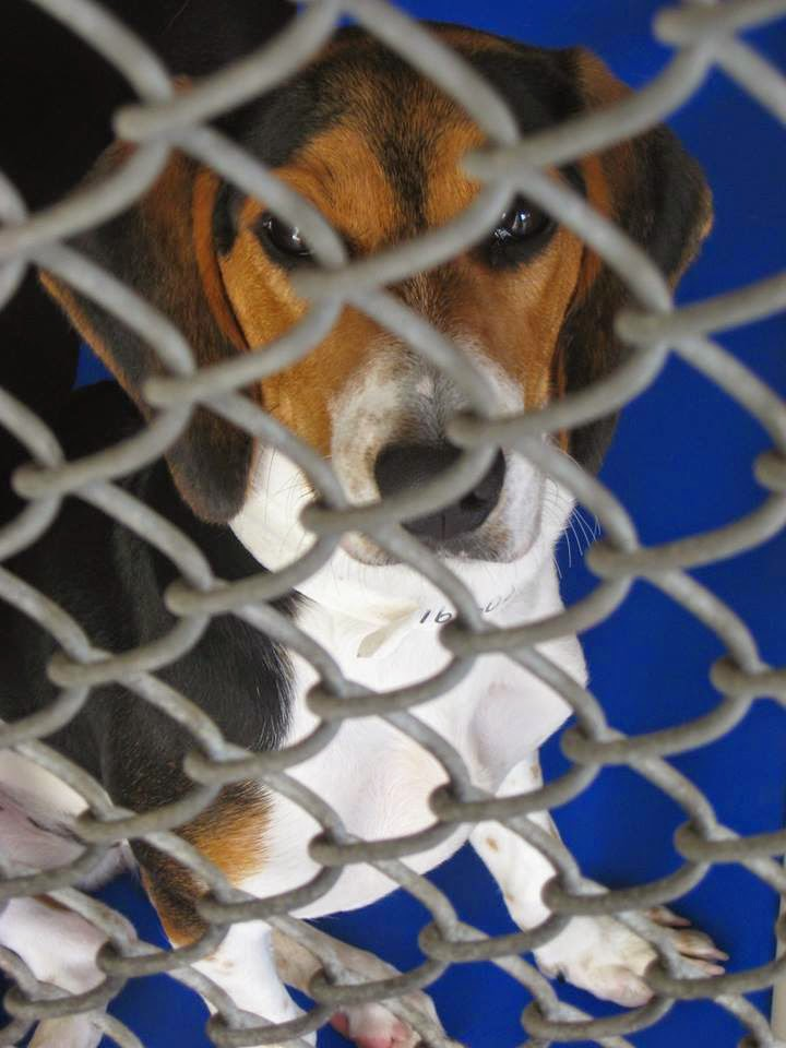 Life With Beagle: Keep Orlando dogs at home: Ideas to keep