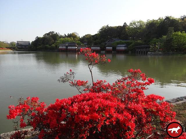 Lac de Nagaoka