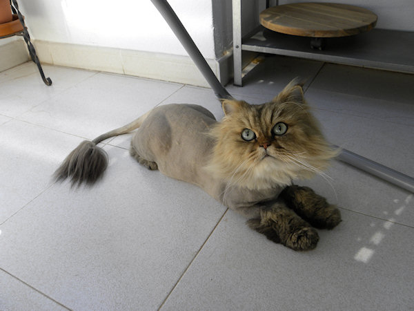Funny Pussy Cats 94