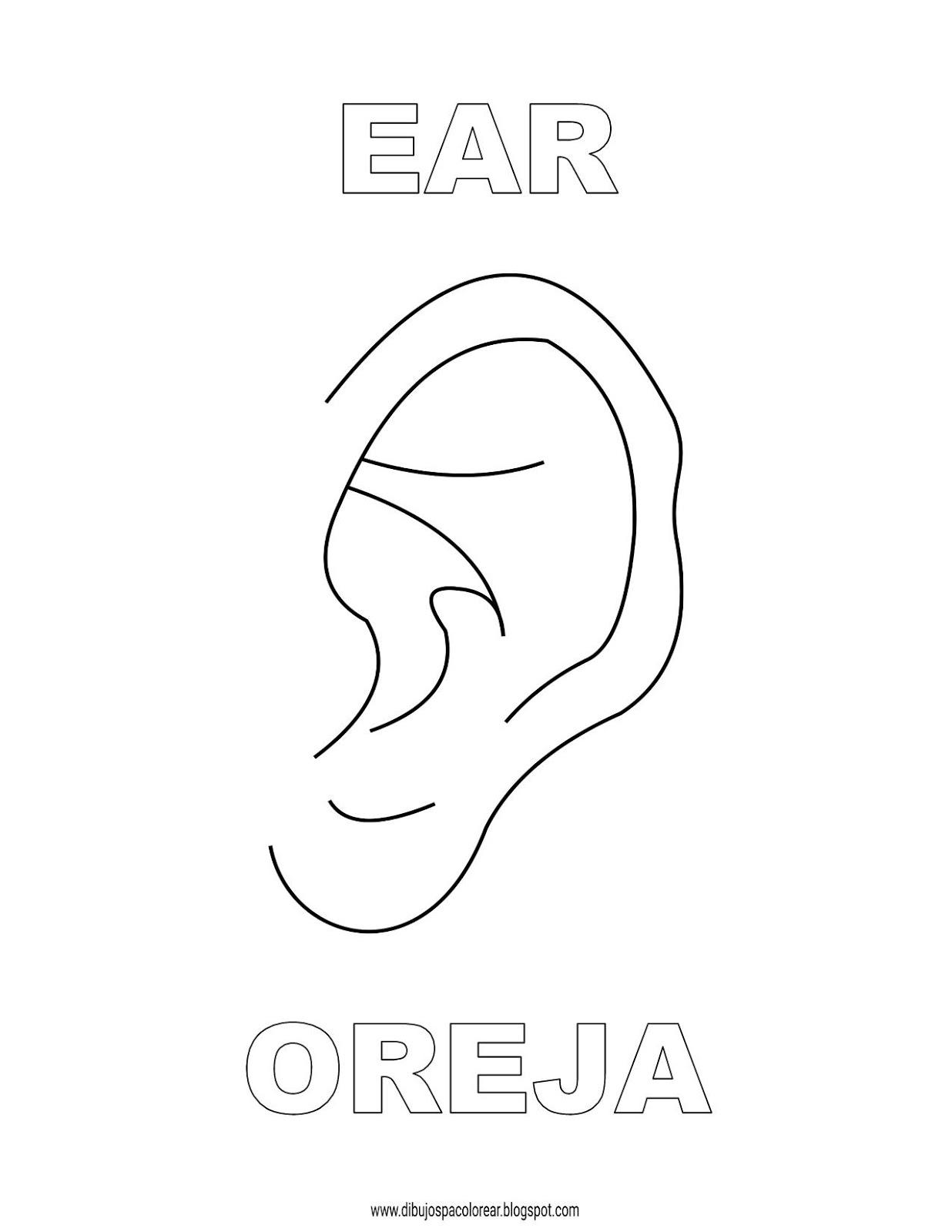 Dibujos Inglés Español Con O Oreja Ear Dibujospacolorear