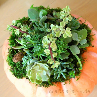 Hot to Plant Succulents on Pumpkins, shared by Crafts a la Mode