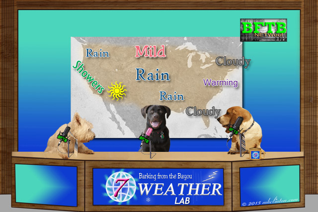 dog weather report with forecast map