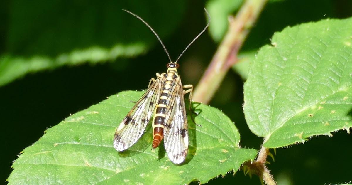 Nos b b tes insecte volant noire z br de jaune - Insecte vert volant ...
